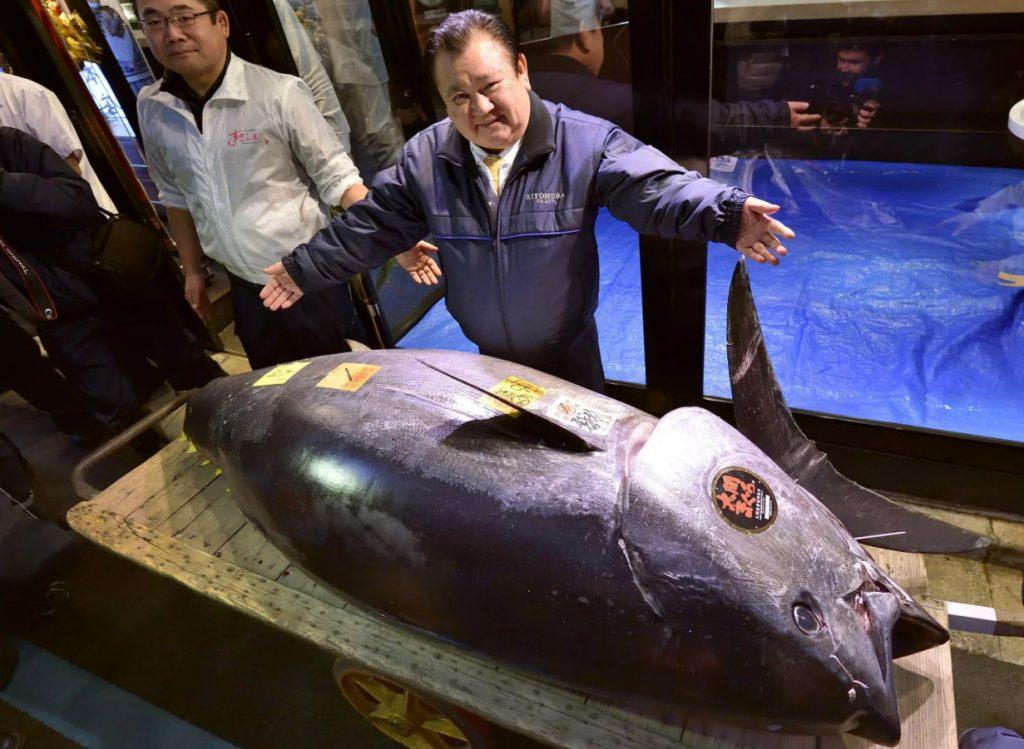Голубой тунец