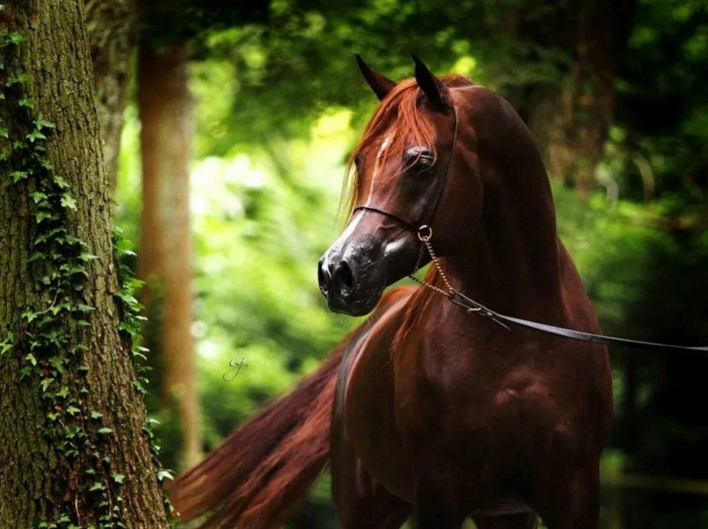 лошадь самые лучшие