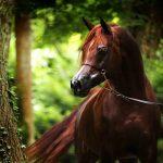 Самые красивые породы лошадей