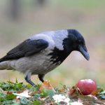 Самые умные среди птиц