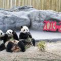 Зоопарка в Торонто