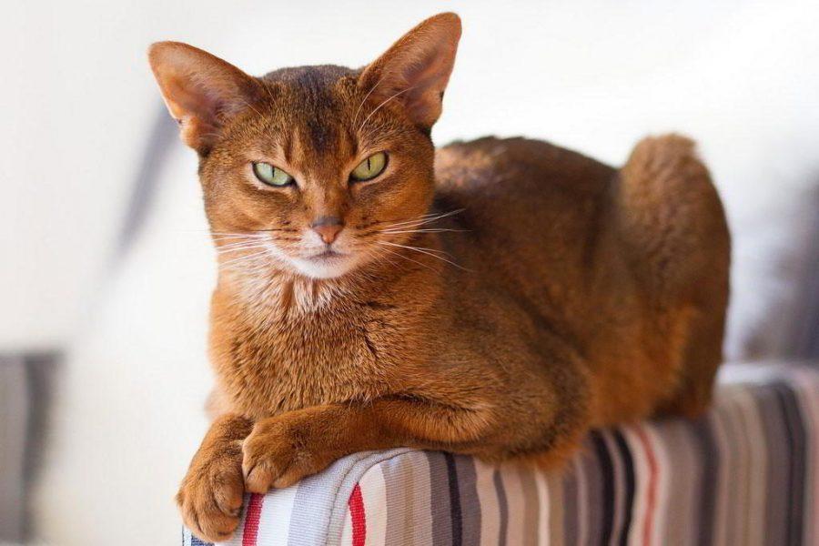 Красивый кот на диване