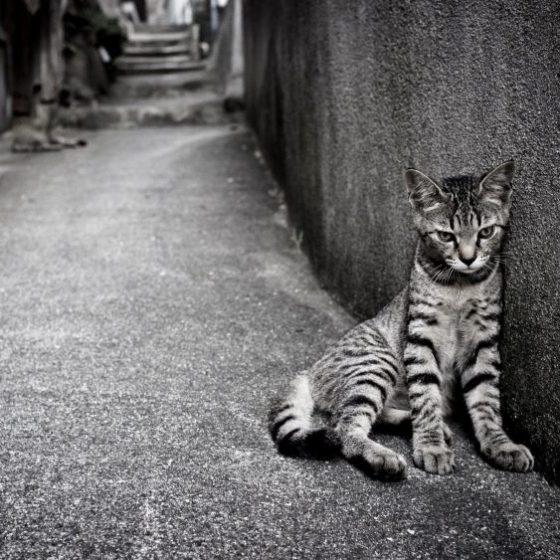Одиночество котов