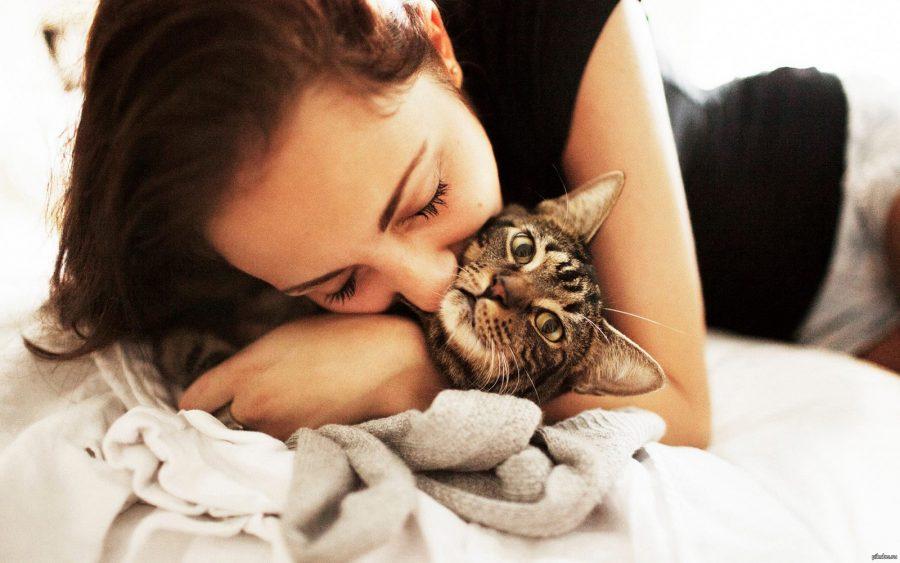 Тискание кота