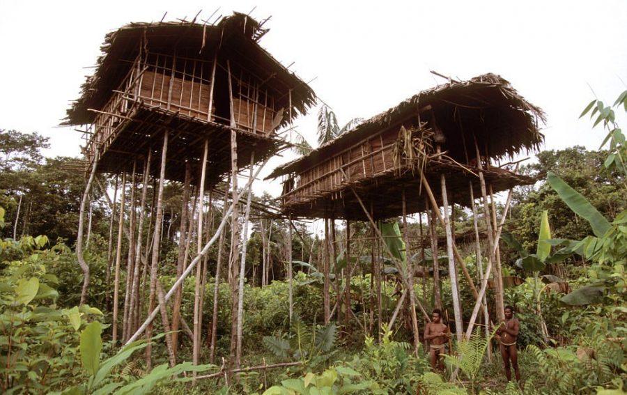 Хижина племени Короваи. Папуа. Новая Гвинея